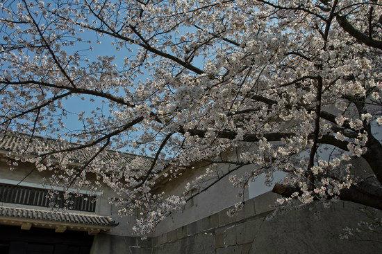 Japan Trip 2012 Vol 2 16