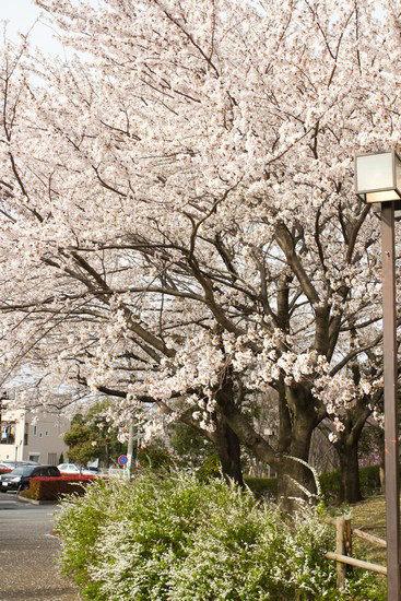 Japan Trip 2012 vol 4 2