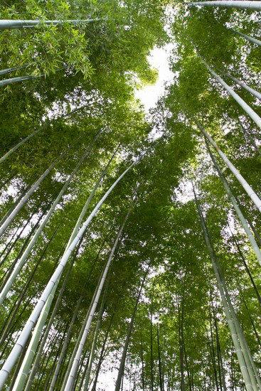 Japan Trip 2012 vol 4 4