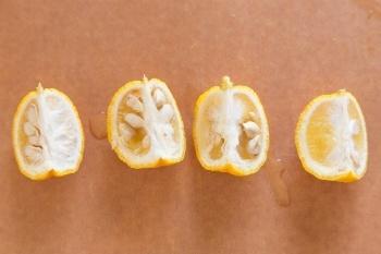 Yuzu Marmalade 1
