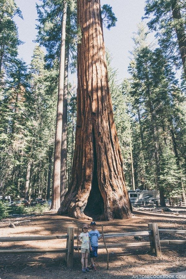 Mariposa Grove Yosemite | Just One Cookbook
