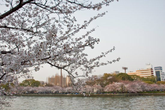 Japan Trip 2012 Vol 2 15