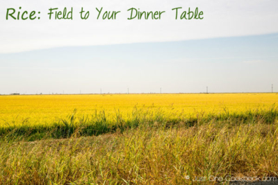 Rice: Field to Your Dinner Table
