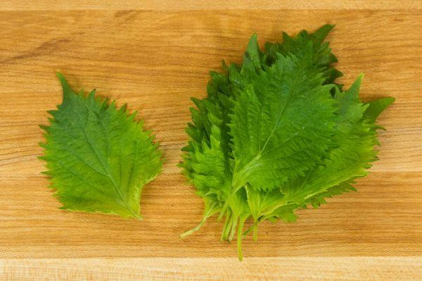 Shiso (Aojiso) | Just One Cookbook