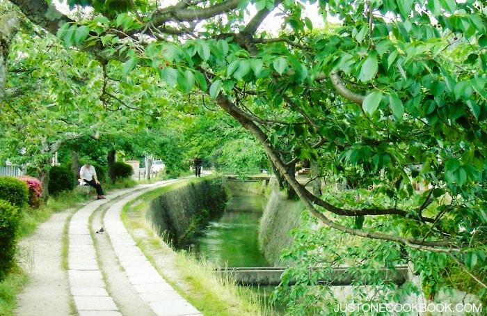 Visiting Kyoto - Philosophers Path