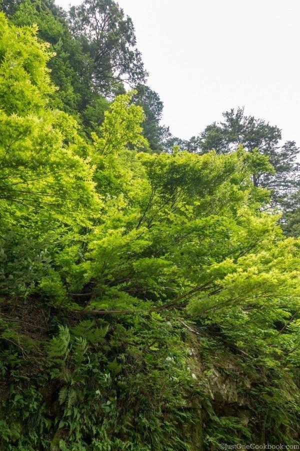 Kurobe Gorge Scenery