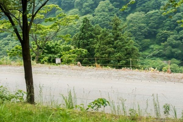 Kurobe Gorge Monkey