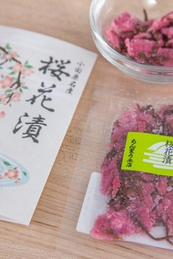 Salt Pickled Cherry Blossoms
