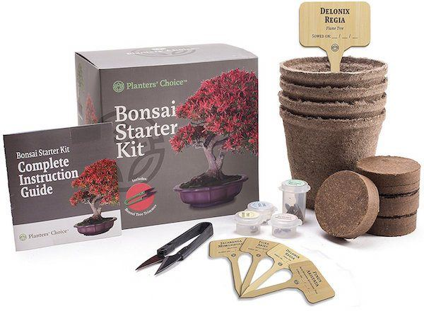 bonsai starter kit holiday gift guide