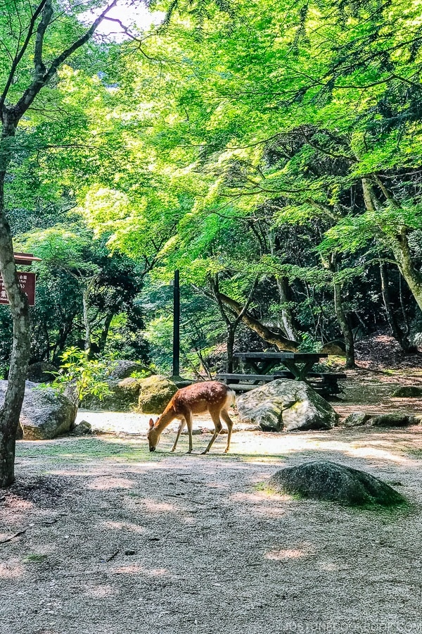 deer at Momijidani Park on Miyajima | JustOneCookbook.com