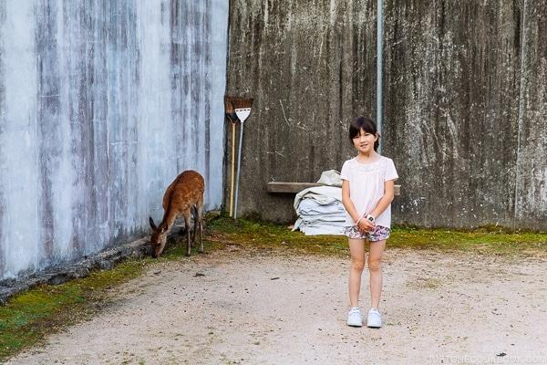 Deer in city Miyajima | JustOneCookbook.com
