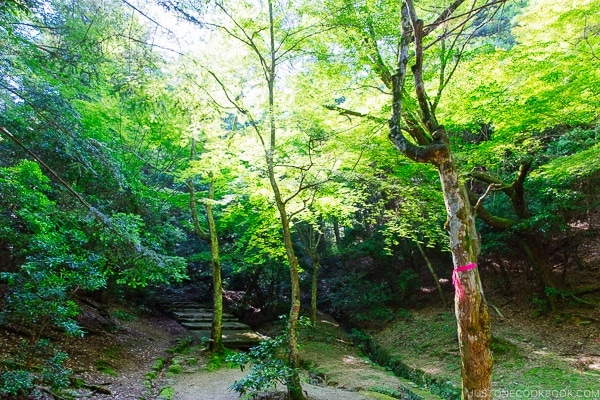 trees at Momijidani Park on Miyajima | JustOneCookbook.com