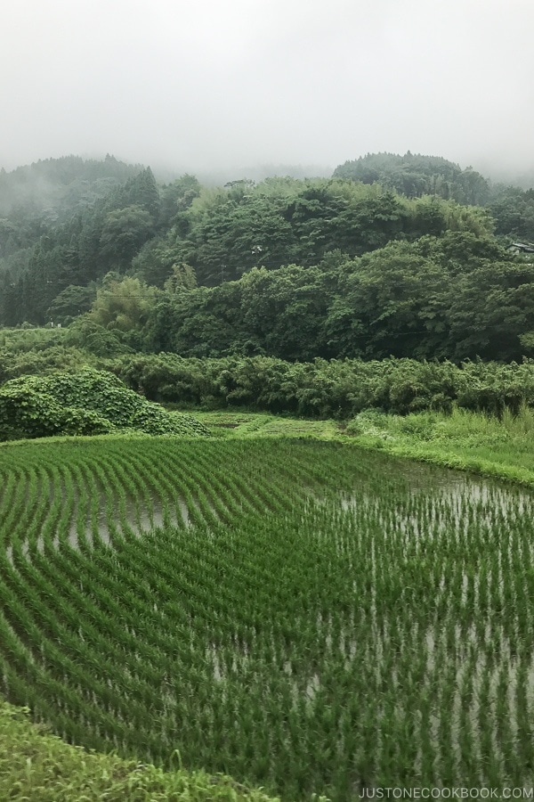 view of rice field in Oita prefecture - Yufuin Travel Guide | justonecookbook.com