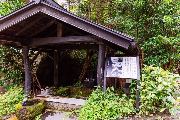 700 year old tree Kurokawa Onsen Travel Guide | justonecookbook.com