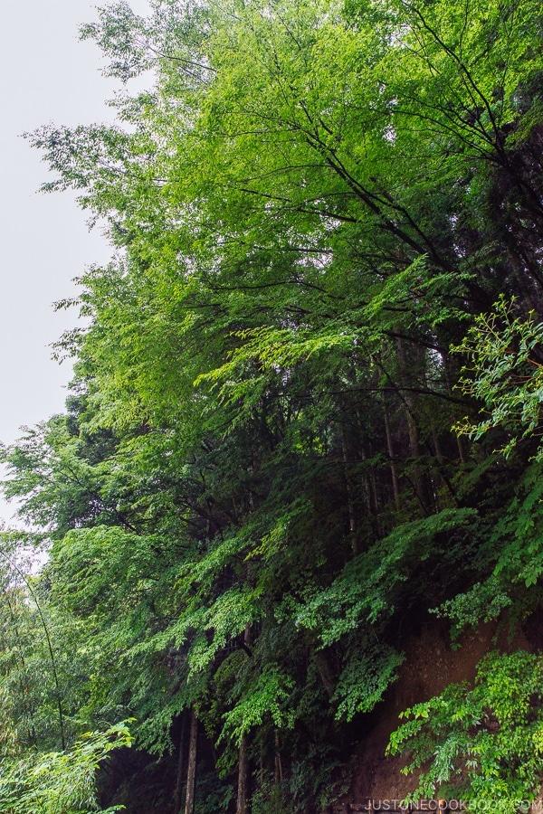 view of forest Kurokawa Onsen Travel Guide   justonecookbook.com