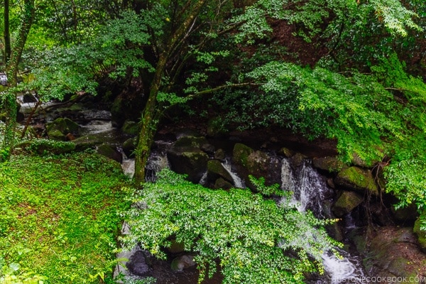 forest and river view Kurokawa Onsen Travel Guide   justonecookbook.com