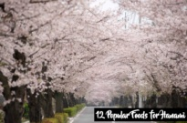 12 Popular Foods to Enjoy at Cherry Blossom Viewing (Hanami)