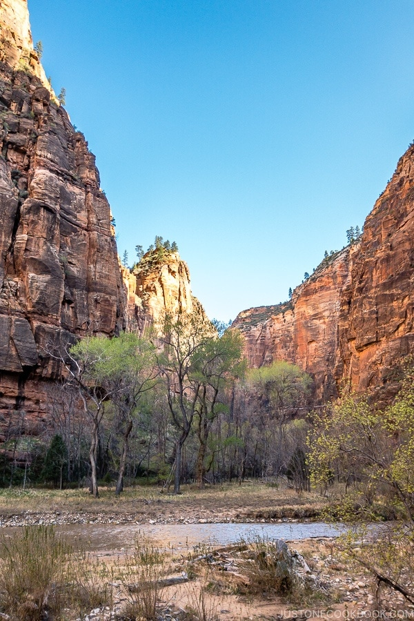 scenery of Virgin River from the Riverside Walk - Zion National Park Travel Guide | justonecookbook.com