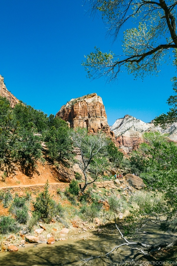 start of Kayenta Trail near The Grotto - Zion National Park Travel Guide | justonecookbook.com
