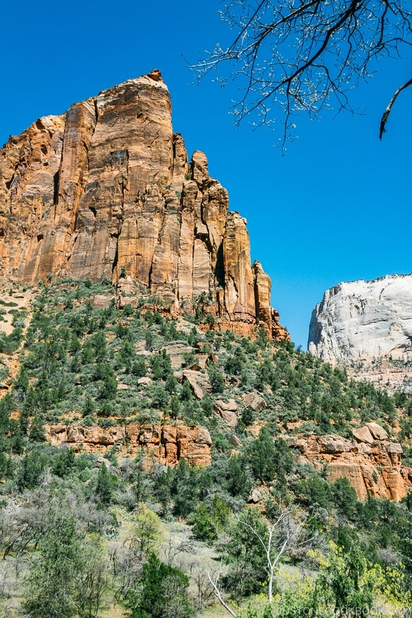 view of Zion Canyon from Emerald Pools Trail - Zion National Park Travel Guide | justonecookbook.com