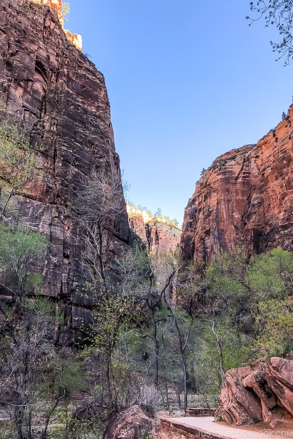 scenery from Riverside Walk - Zion National Park Travel Guide | justonecookbook.com