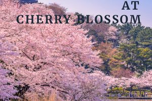 Popular foods to enjoy at cherry blossom season in Japan