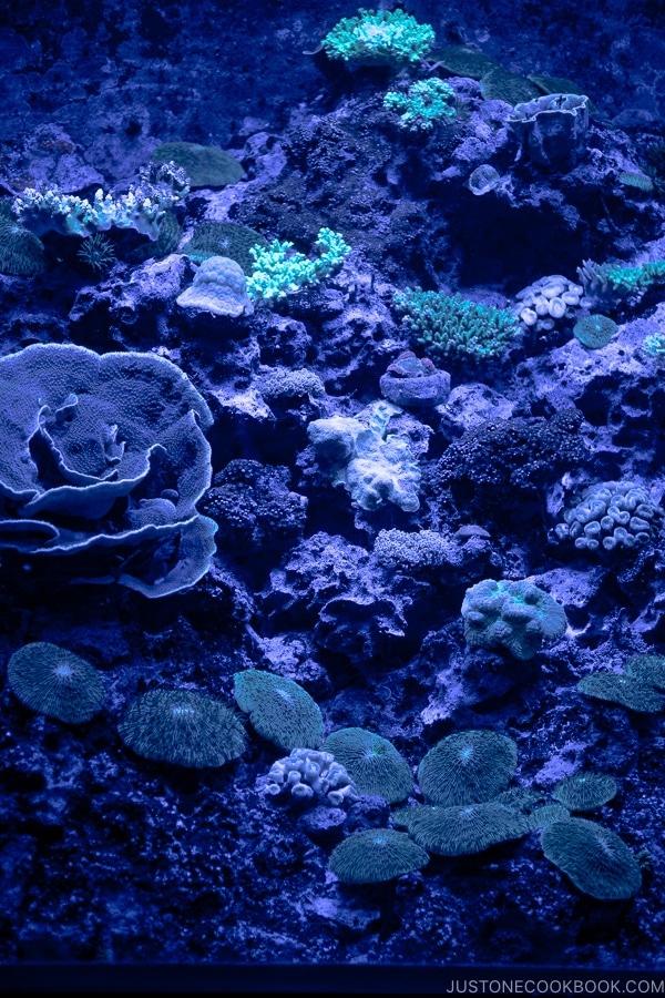 Deep Sea World Churaumi Aquarium   justonecookbook.com