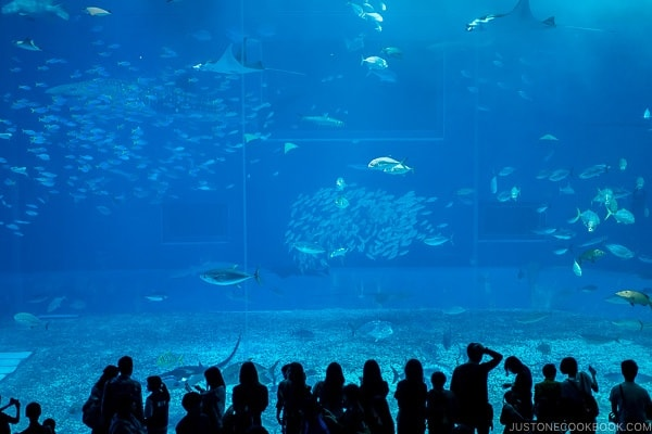 giant tank with assorted fish at Churaumi aquarium at Ocean Expo Park Okinawa | justonecookbook.com