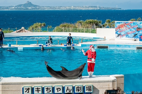 a dolphin on stage at Ocean Expo Park Okinawa | justonecookbook.com