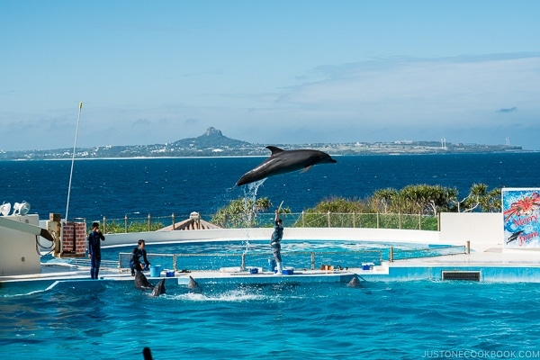 a dolphin leaping across the pool at Ocean Expo Park Okinawa | justonecookbook.com
