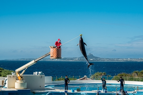 a dolphin leaping out water to touch a high target with its nostrum at Ocean Expo Park Okinawa | justonecookbook.com