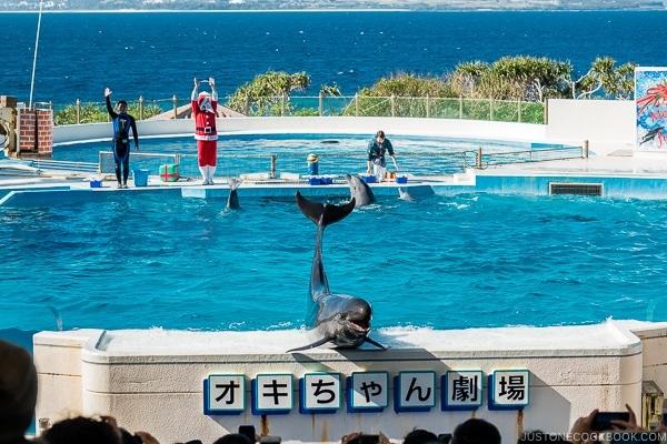 dolphin show at Ocean Expo Park Okinawa | justonecookbook.com