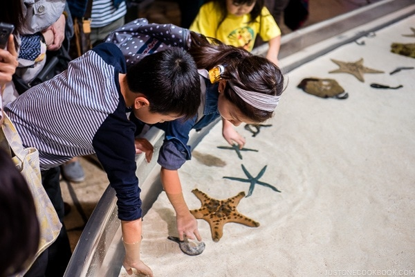 children touching sea star and shell fish at Churaumi aquarium at Ocean Expo Park Okinawa | justonecookbook.com
