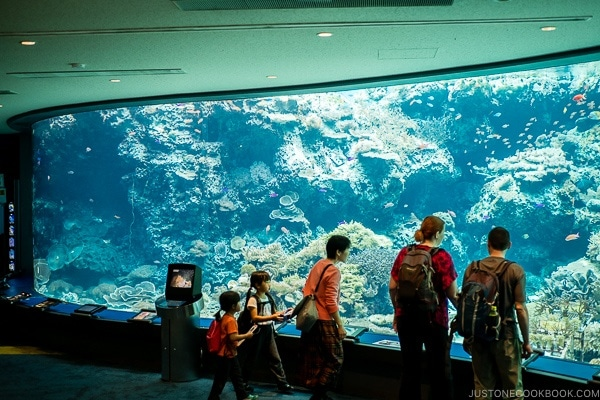 visitors observing fish inside tank at Churaumi aquarium at Ocean Expo Park Okinawa | justonecookbook.com