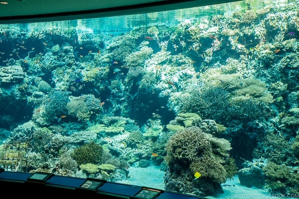 fish tank with corals at Churaumi aquarium at Ocean Expo Park Okinawa | justonecookbook.com