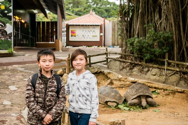 children in front of tortoise at Habu Park - Okinawa World | justonecookbook.com