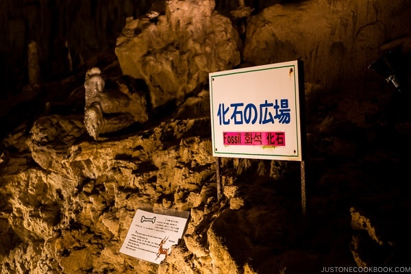fossils in Gyokusendo Cave - Okinawa World | justonecookbook.com