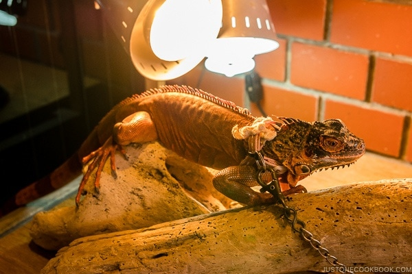 lizard on display at Habu Park - Okinawa World | justonecookbook.com