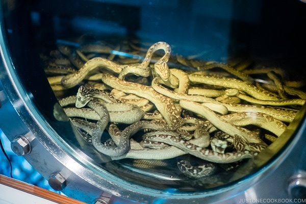 snake in liquor tank - Okinawa World | justonecookbook.com