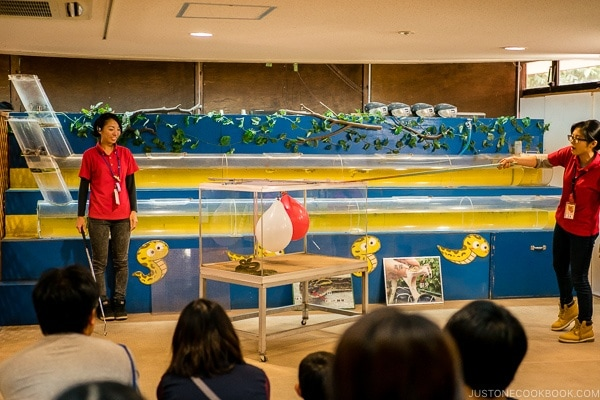 snake heat sensing demonstration at Habu Park - Okinawa World | justonecookbook.com