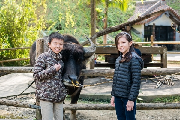 children next to a water buffalo at Ryukyu Mura Okinawa | justonecookbook.com