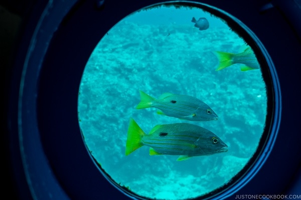 looking out at fish through the window at underwater observatory at Busena Marine Park - Okinawa Travel Guide | justonecookbook.com