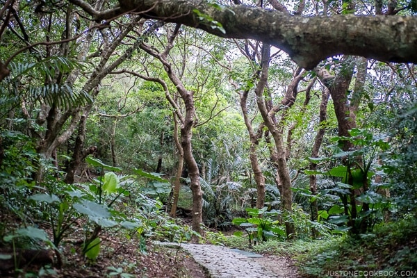 stone pathway in the forest at Seifa-utaki 斎場御嶽 - Okinawa Travel Guide | justonecookbook.com