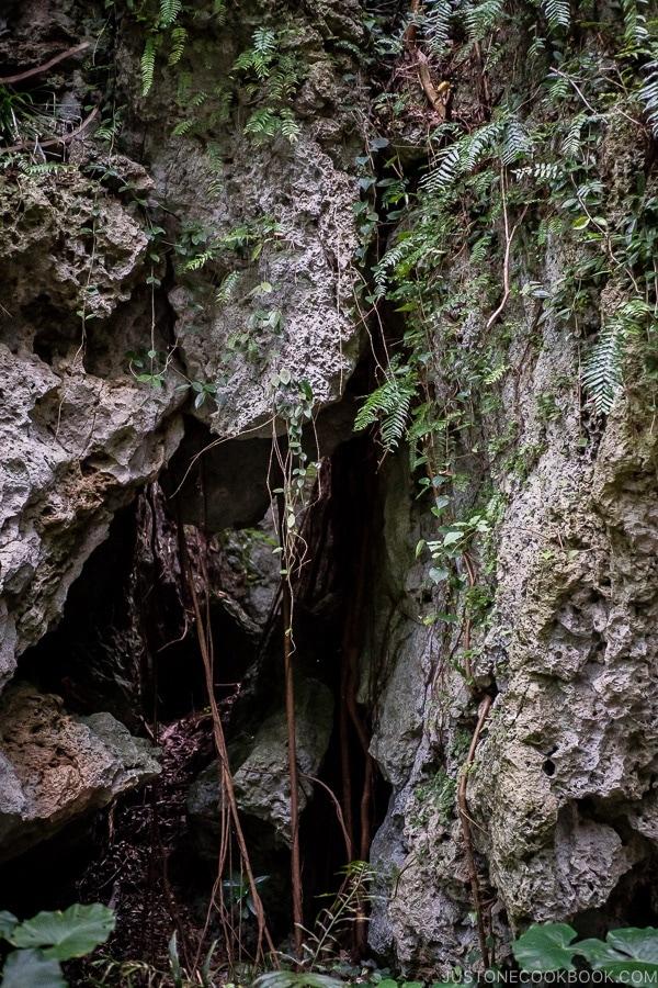 scenery of stone and plants at Seifa-utaki 斎場御嶽 - Okinawa Travel Guide | justonecookbook.com