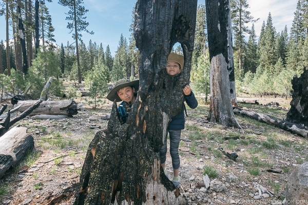 two children standing next to a tree