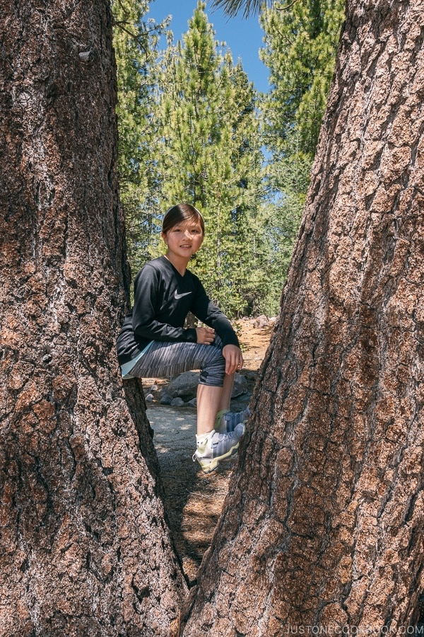 Just One Cookbook child sitting between 2 tree braches - Lassen Volcanic National Park Travel Guide | justonecookbook.com