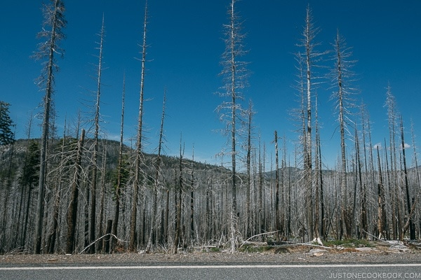view of burnt trees - Lassen Volcanic National Park Travel Guide | justonecookbook.com