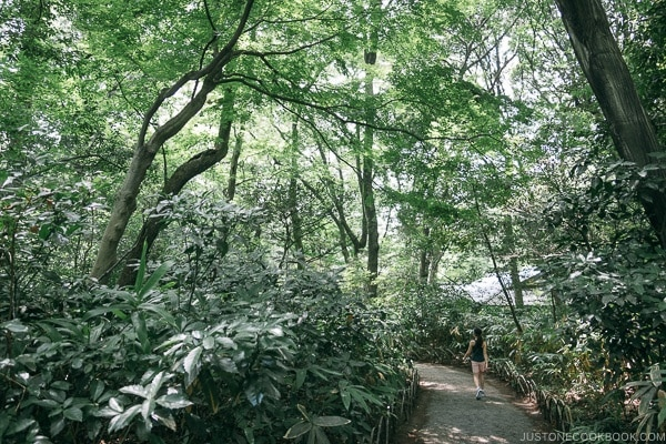 walkway in Meiji Jingu Gyoen - Meiji Jingu Guide | justonecookbook.com