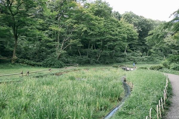 Iris garden in Meiji Jingu Gyoen - Meiji Jingu Guide | justonecookbook.com