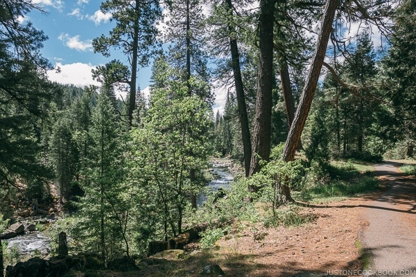 scenery near Middle Falls McCloud River - Mount Shasta Travel Guide | justonecookbook.com